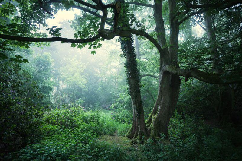 Sherringham Woods