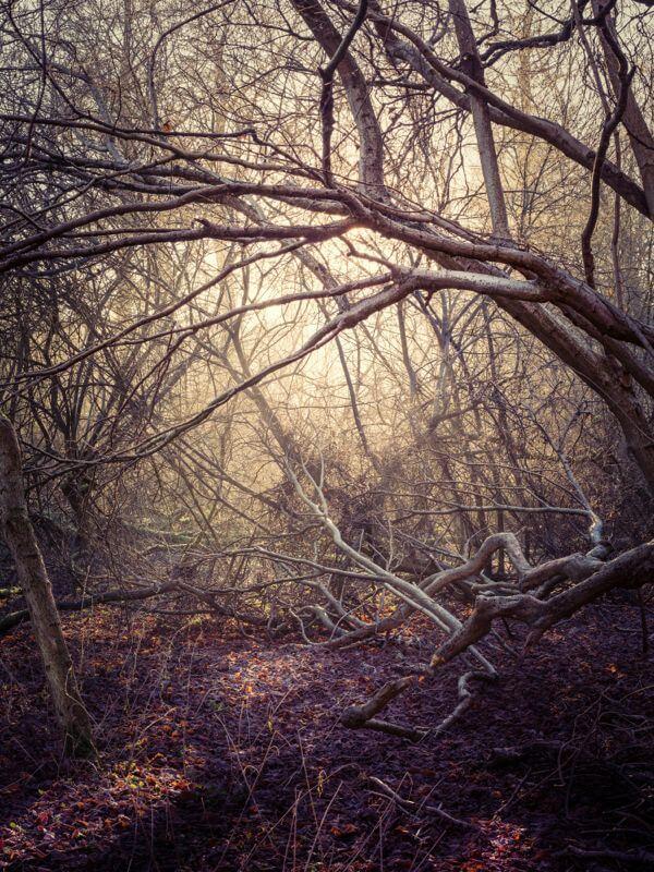 Herringfleet Woods