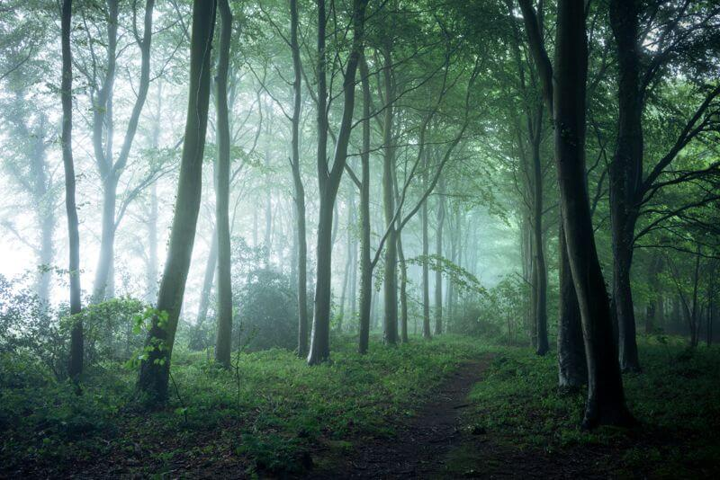 Bacton Wood