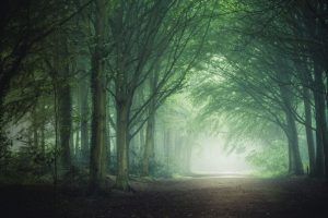 Beautiful Photos of Trees and Woodlands by Matthew Dartford