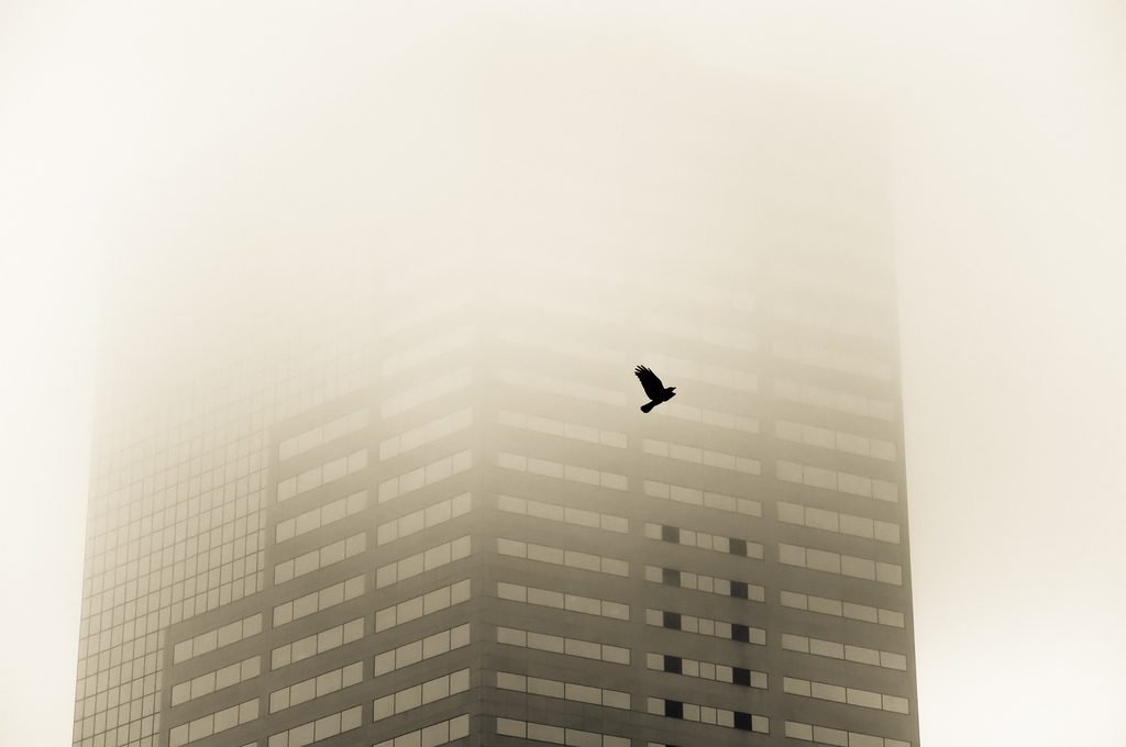 raven in the fog
