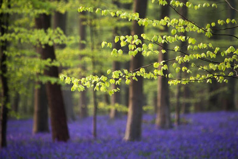 trees depth of field