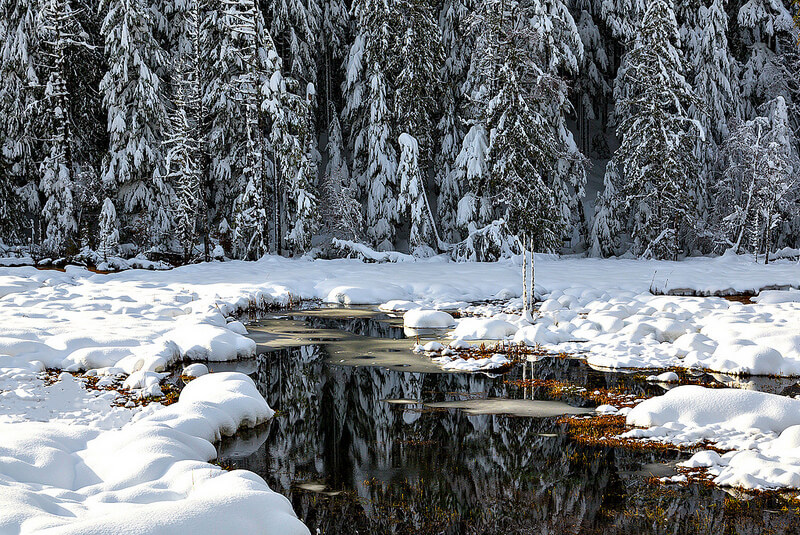 Winter Wonderland Longmire, Mt Rainier NP, WA