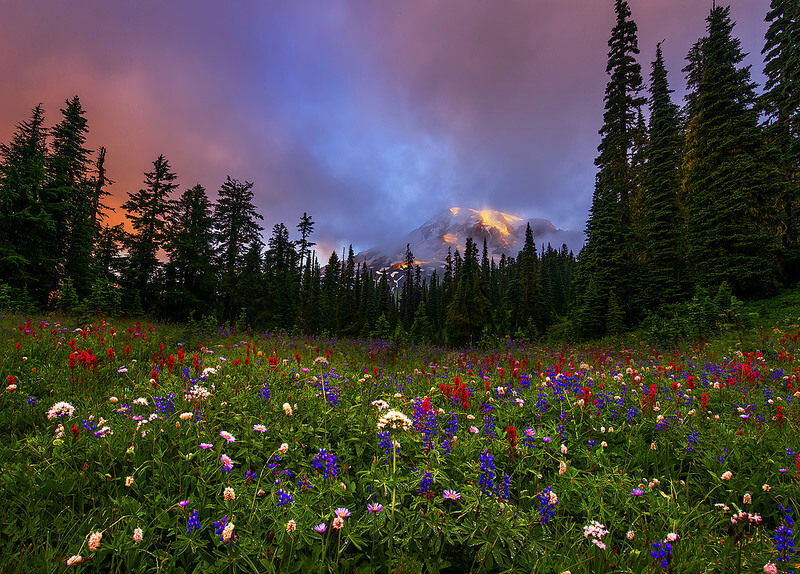 Mt Rainier Flowers