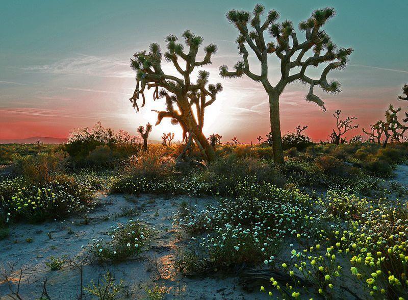 Rennett Stowe - Desert in Spring