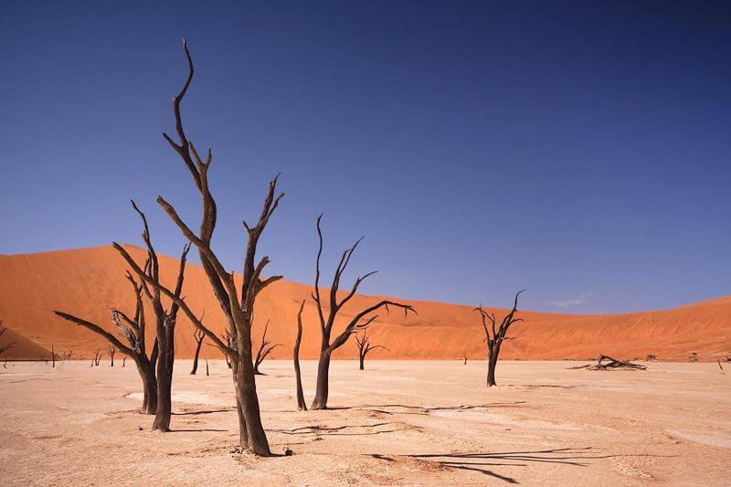 Deadvlei namib desert