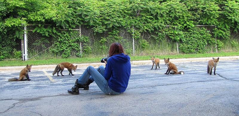 foxes surrounding photographer