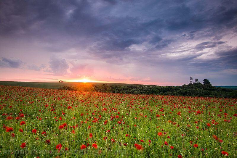 Sunrise over a poppy field near Wherwell, Hampshire.