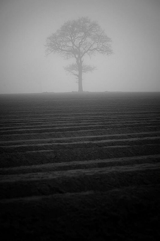 James Drury tree black and white
