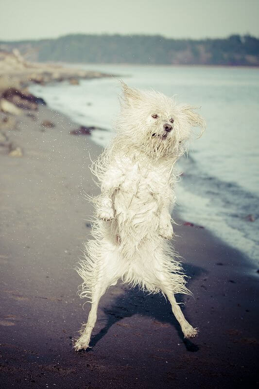 Sarah Bourque - Goofy dog at the beach