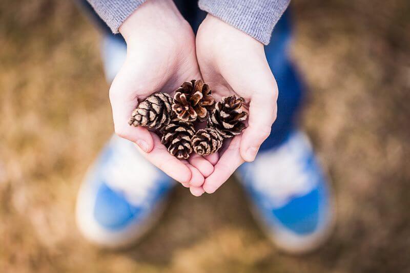 Greig Reid - Pine Tree Cones