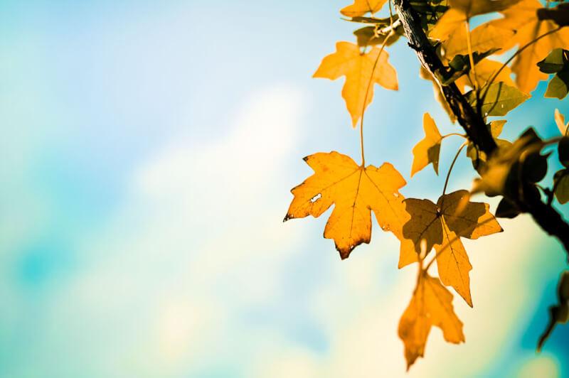 an autumn day by jordan parks
