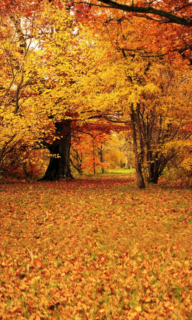 autumn trees backdrop