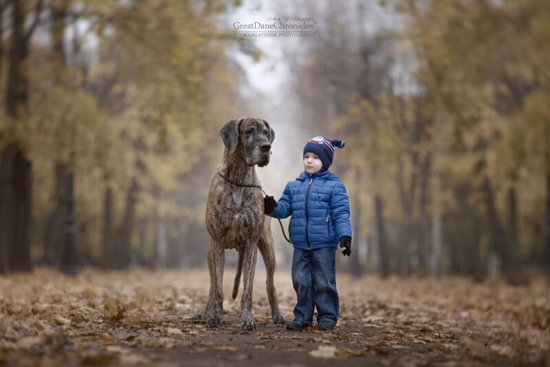 Cute Pictures Of Big Dogs And Little Kids By Andy Seliverstoff - Tiny children and their huge dogs photographed in adorable portraits by andy seliverstoff