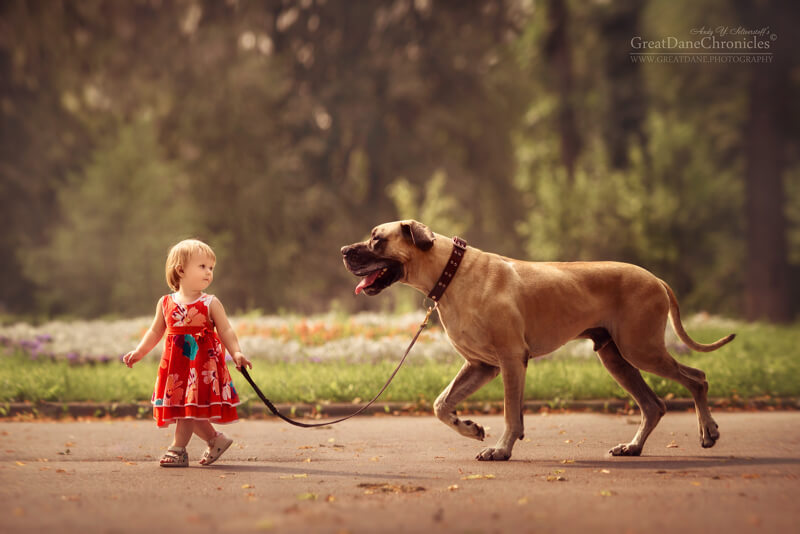 big dogs and little kids