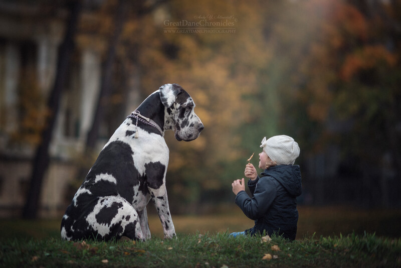 25 Cute Pictures Of Big Dogs And Little Kids By Andy