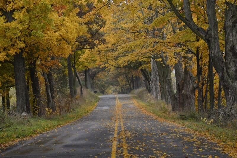 Simon Thalmann - Fall in Michigan