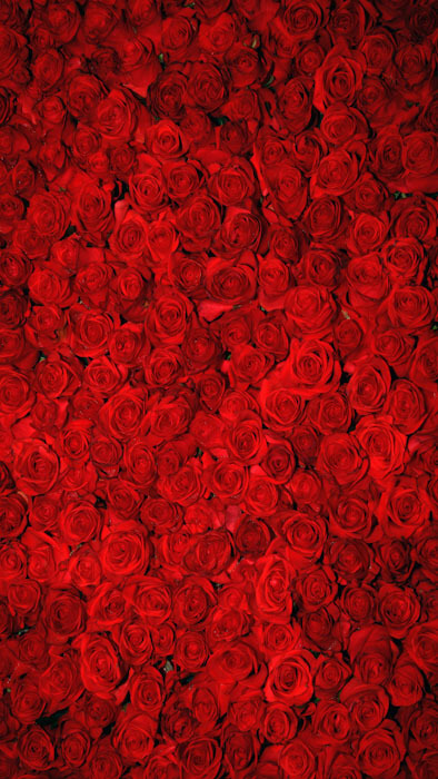 roses backdrop