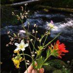 Seasonal Photos: Beautiful Wild Bouquets of Nature