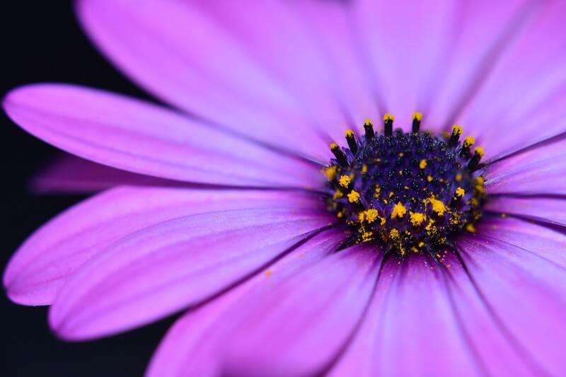 kev-shine - flower