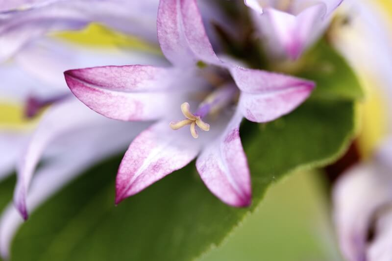 Rodrigue ROMON - Flower
