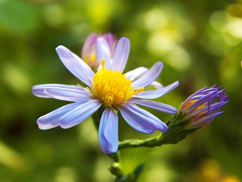 Chris - Wild Flower