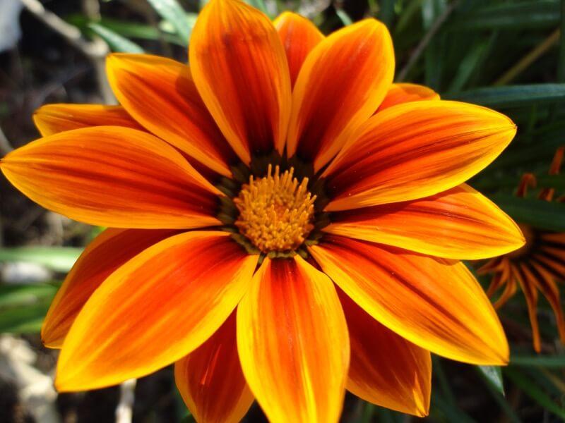 amzongrl1 - Flower