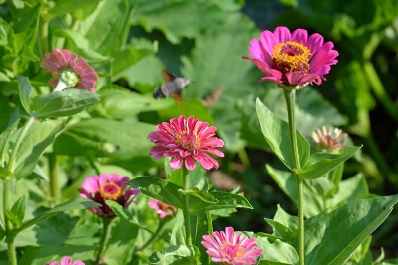 walmarc04 - Flowers in the garden, wild flowers