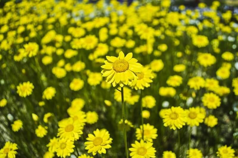Christian Reusch - Flowers