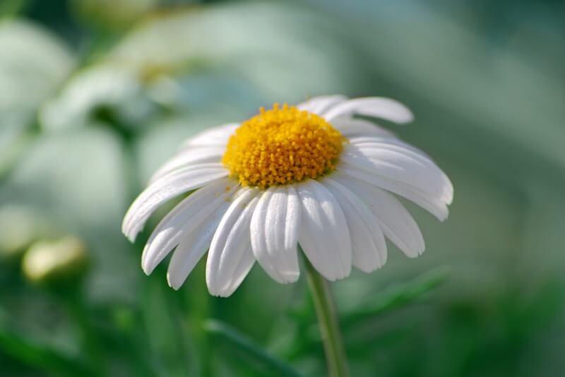 Norlando Pobre - Flower Power