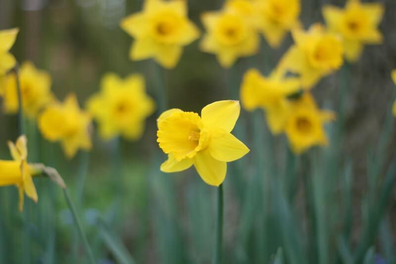 Adam Greig - flowers