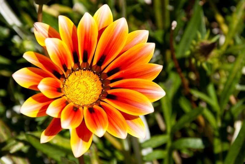 Alejandro Mallea - Spring flower