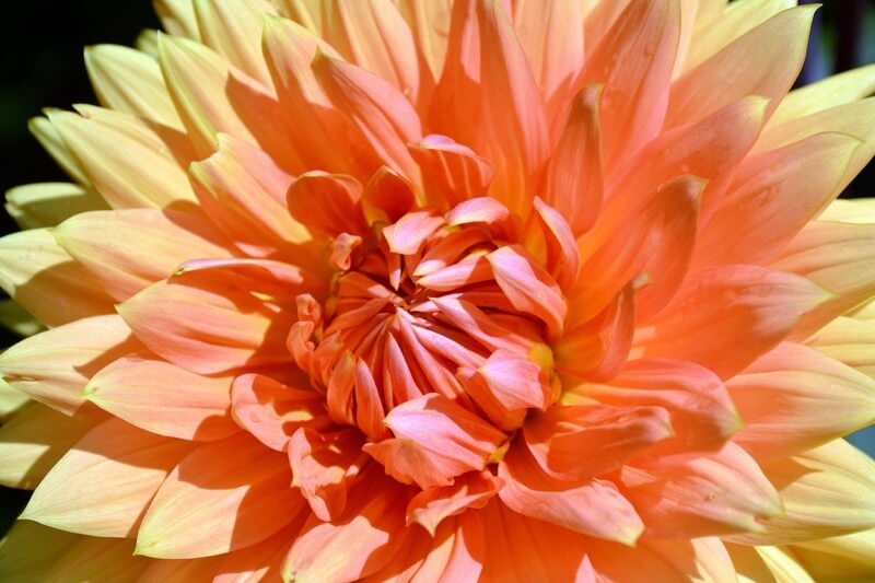 walmarc04 - Flower