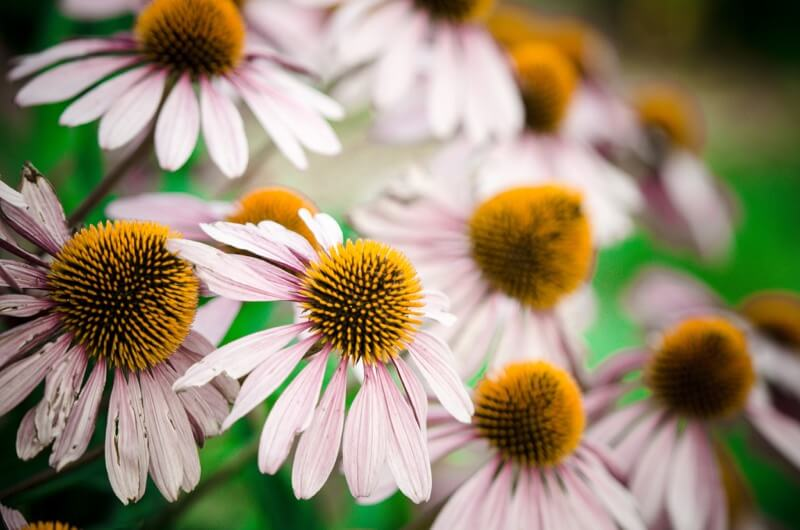 m01229 - Flowers - Lake Harriet