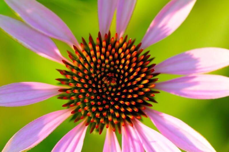 Scott Parker - flower