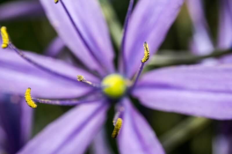 Lennart Tange - Flower