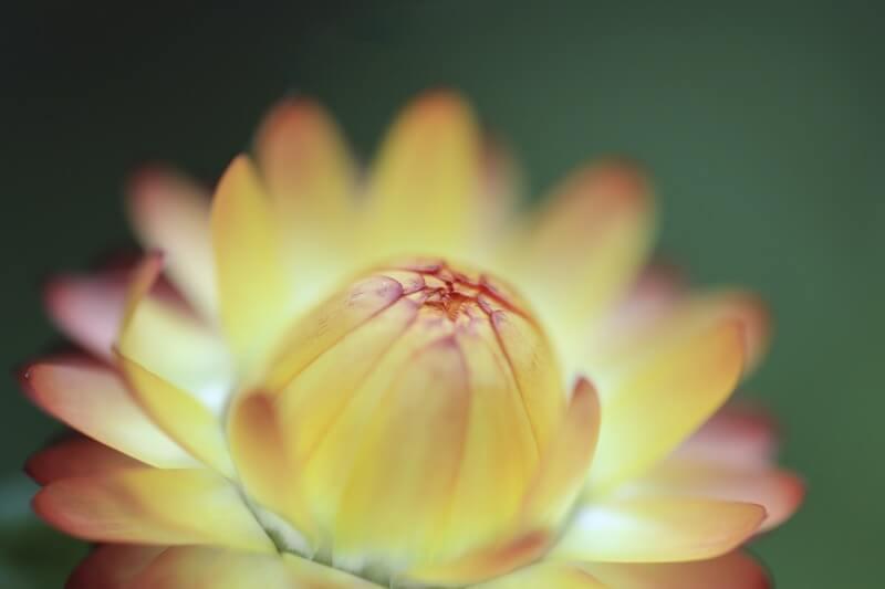 Budiman Salleh - Flowers at Dome