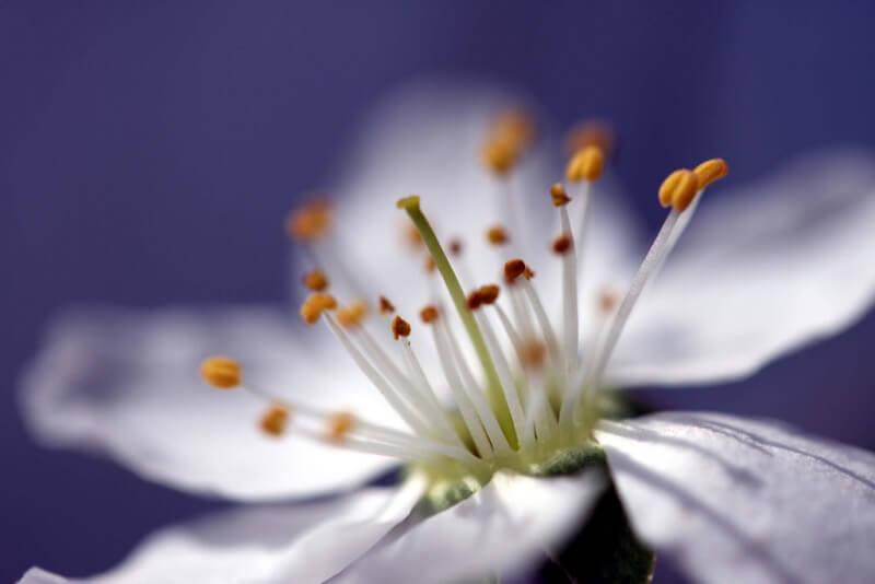 Acid Pix - flower shadow