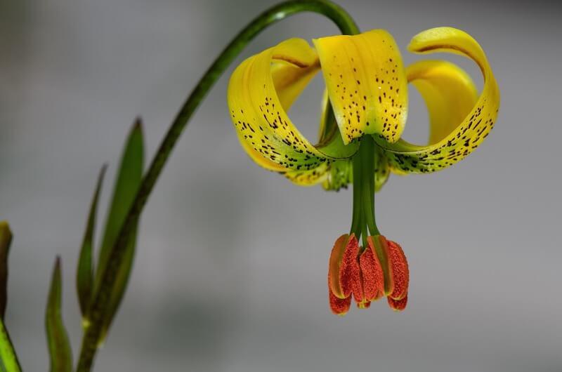 Alberto Abouganem Stephens - Flower