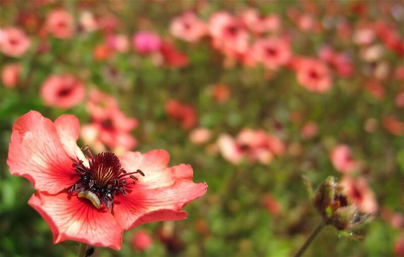 Kenny Murray - Flower n' grub
