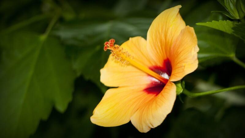 Kuster & Wildhaber Photography - flower