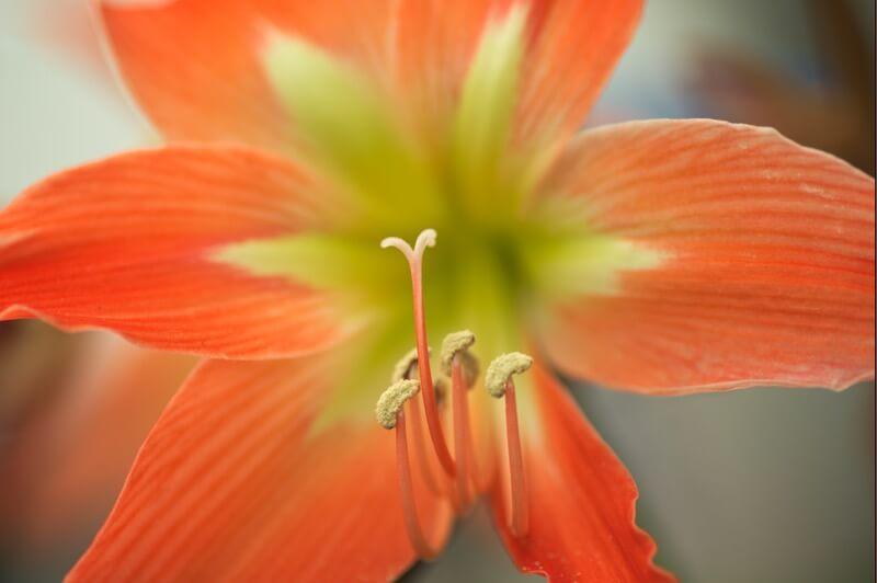 llee_wu - Flowers