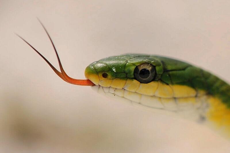 Brian Garrett - Rough Green Snake
