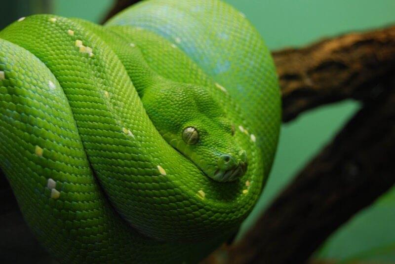 LongitudeLatitude - snake