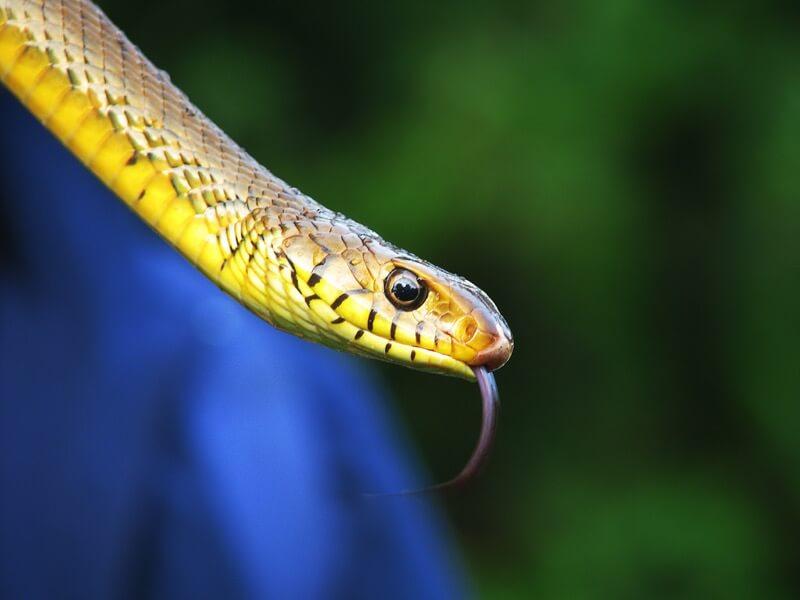 I for Detail. - Snake