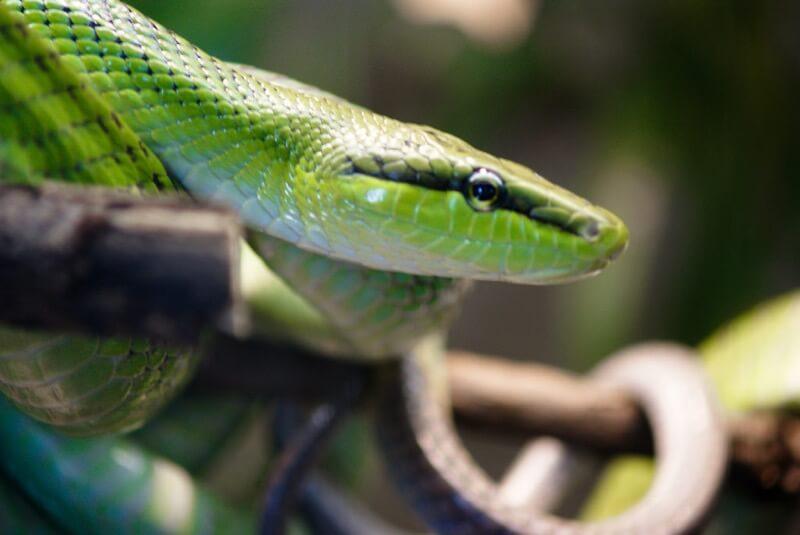 Eleleleven - snake