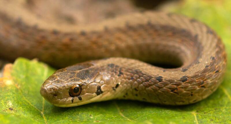 John Robb - Brown Snake