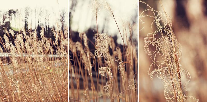 Emily Carlin - Sunny Triptych
