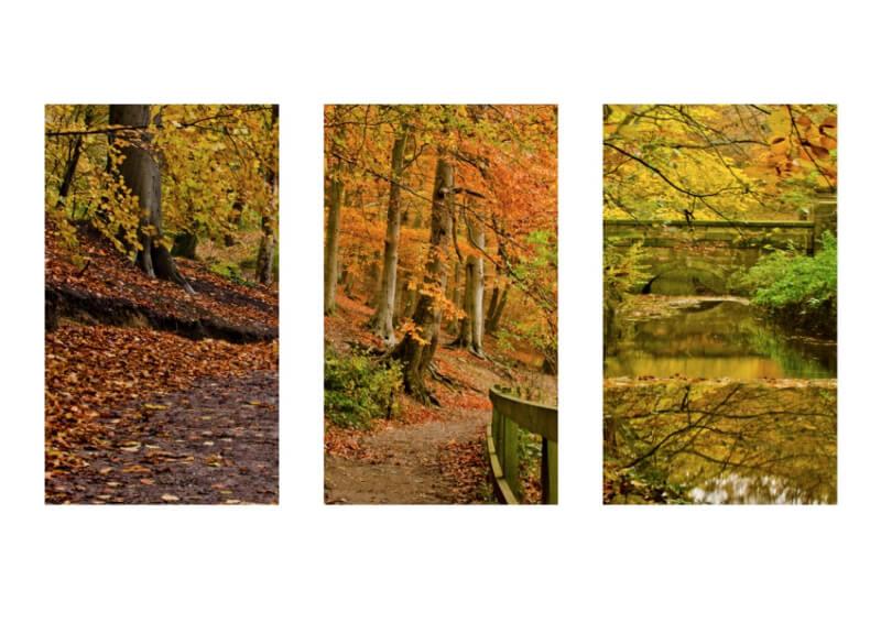 John - Strolling Leaves