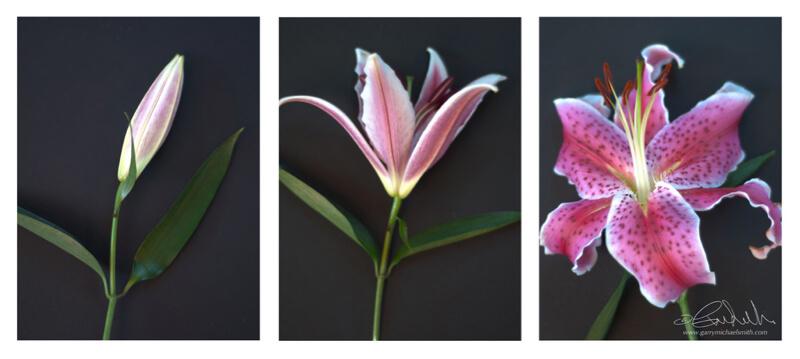 Garry Smith - Lily Triptych